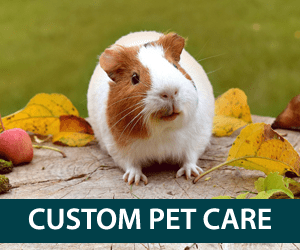 Custom pet care in Plymouth, MA