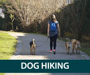 Pet sitting plymouth, dog walking | Just Around the Corner