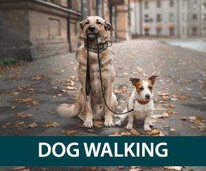 Pet sitting plymouth, dog walking | Just Around the Corner Pet Sitting