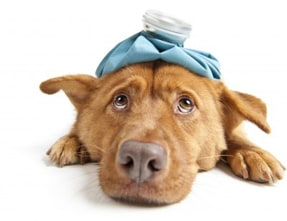 Does My Dog Have a Urinary Tract Infection?