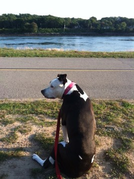 The Best Dog Walking Trails Around Plymouth,MA