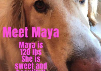 Maya America's Hometown Hound contestant