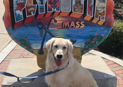 Otis golden retriever with Plymouth shell America's Hometown Hound contestant