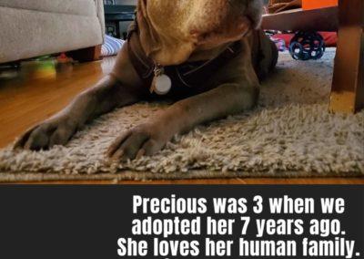 Precious America's Hometown Hound contestant