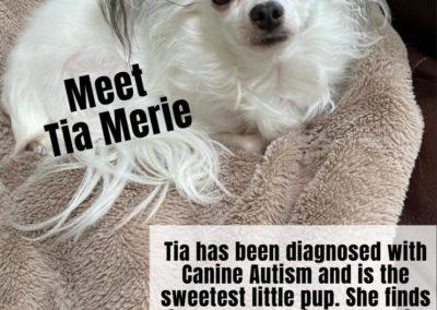 Tia Meria America's Hometown Hound contestant