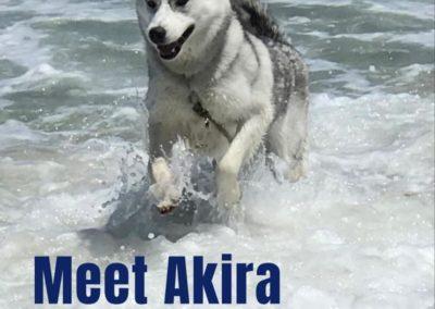 Akira America's Hometown Hound contestant