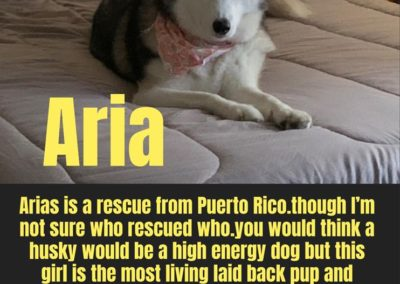America's Hometown Hound contestant Aria rescue dog