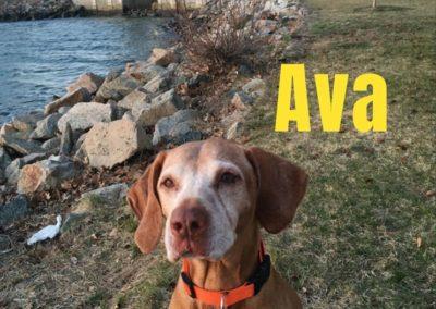 Ava America's Hometown Hound contestant
