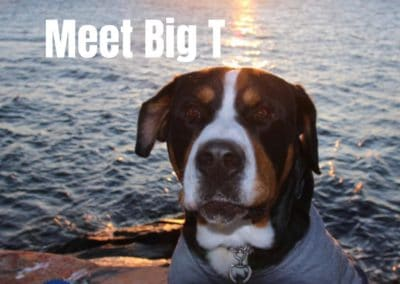 Big T America's Hometown Hound contestant