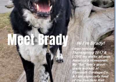Brady black and white dog America's Hometown Hound contestant