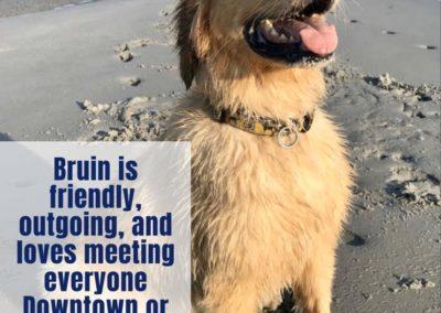 Bruin America's Hometown Hound contestant