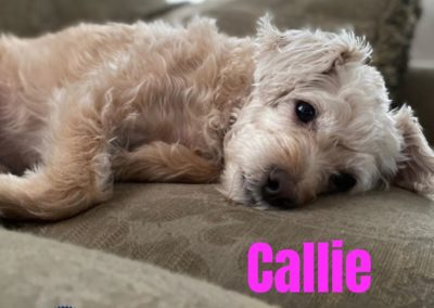 America's Hometown Hound contestant Callie