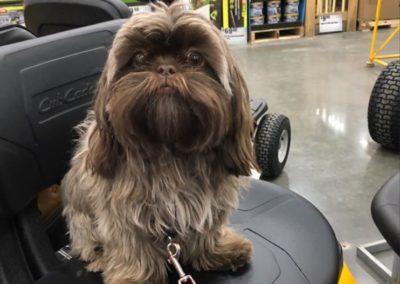 America's Hometown Hound contestant Charlie fuzzy dog