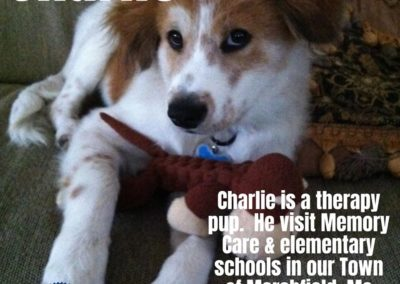 America's Hometown Hound contestant Charlie therapy pup