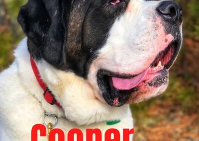 Cooper America's Hometown Hound contestant