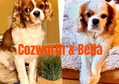 Cozworth and Bella America's Hometown Hound contestant