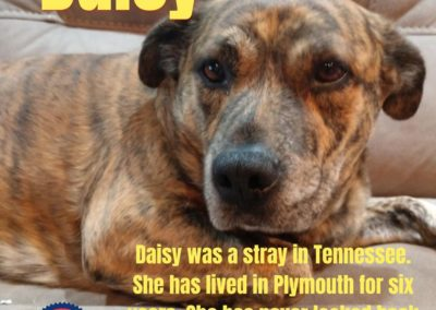 America's Hometown Hound contestant Daisy Tennessee stray