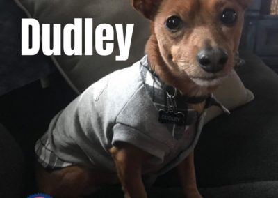 America's Hometown Hound contestant Dudley
