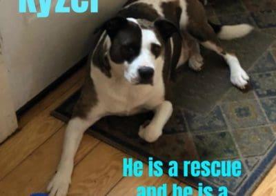 Kyzer rescue America's Hometown Hound contestant