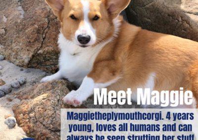 America's Hometown Hound contestant Maggie corgi