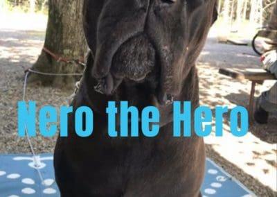 America's Hometown Hound contestant Nero