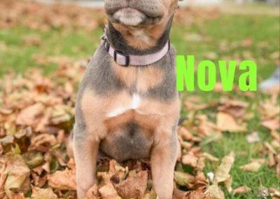 America's Hometown Hound contestant nova pup
