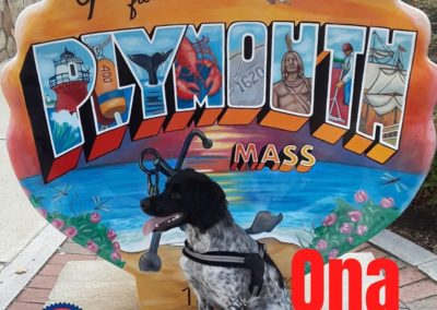 America's Hometown Hound contestant Ona spotted dog