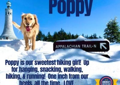 America's Hometown Hound contestant Poppy