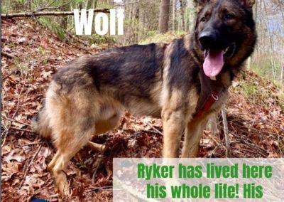 America's Hometown Hound contestant Ryker
