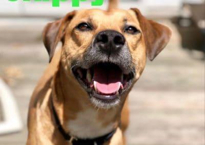 America's Hometown Hound contestant Skippy