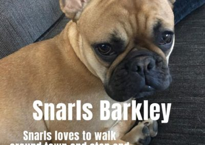 America's Hometown Hound contestant Snarls Barkley