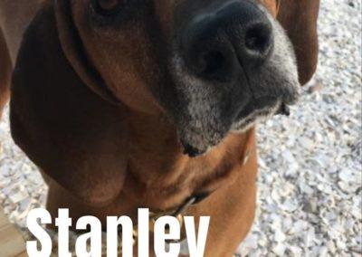 America's Hometown Hound contestant Stanley