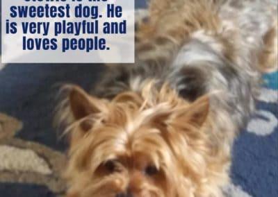 America's Hometown Hound contestant Stewie