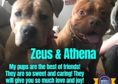 America's Hometown Hound contestant Zeus and Athena