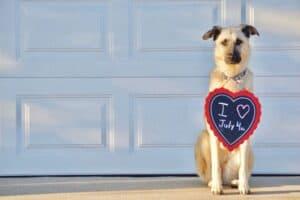 Dog loves July 4th!