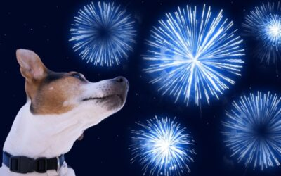 5 Ways to Keep you Dog Calm During Fireworks