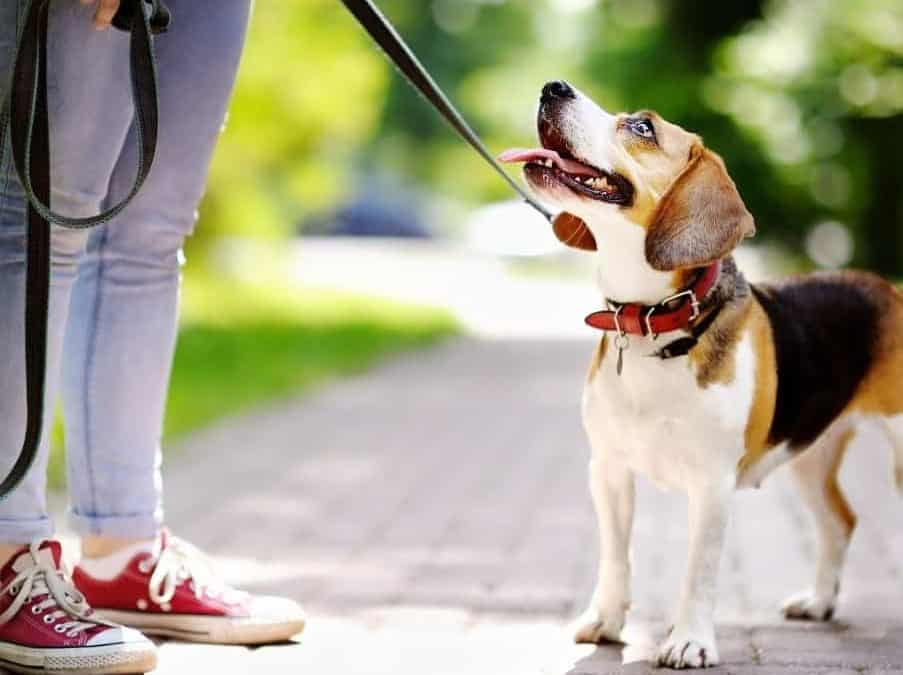 Key Questions to Ask a Dog Walker