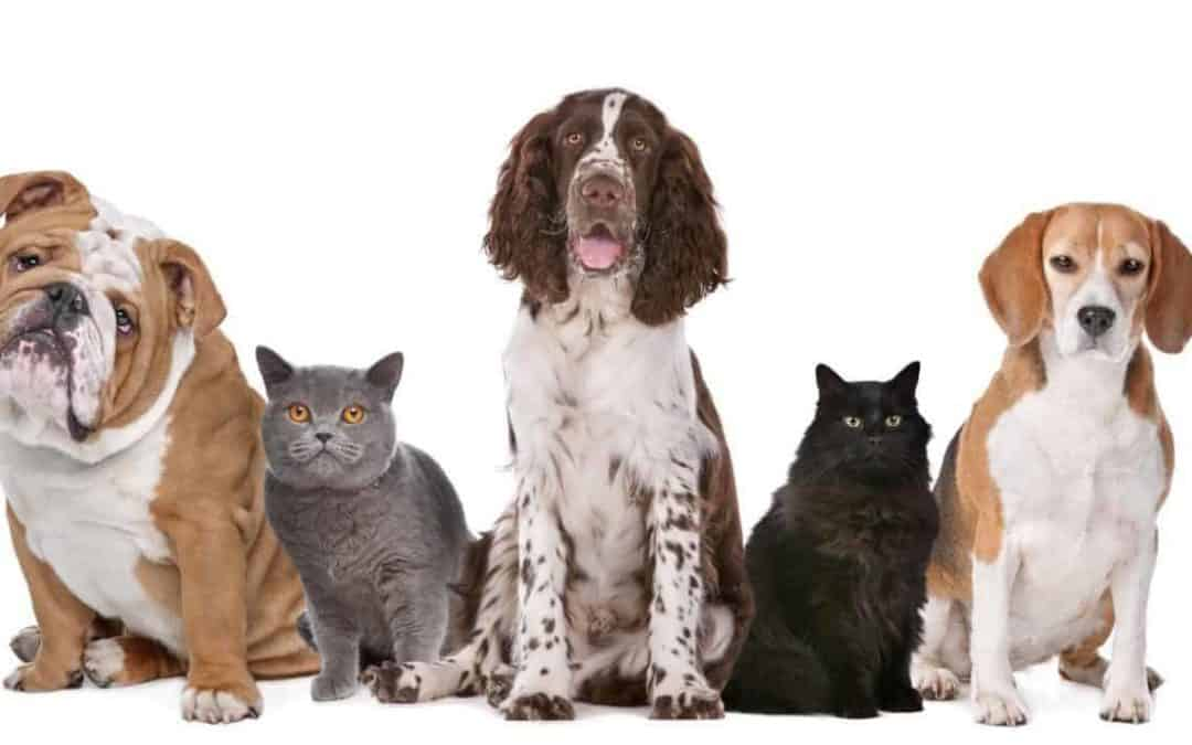 Dog Walking & Pet Care: The New Normal