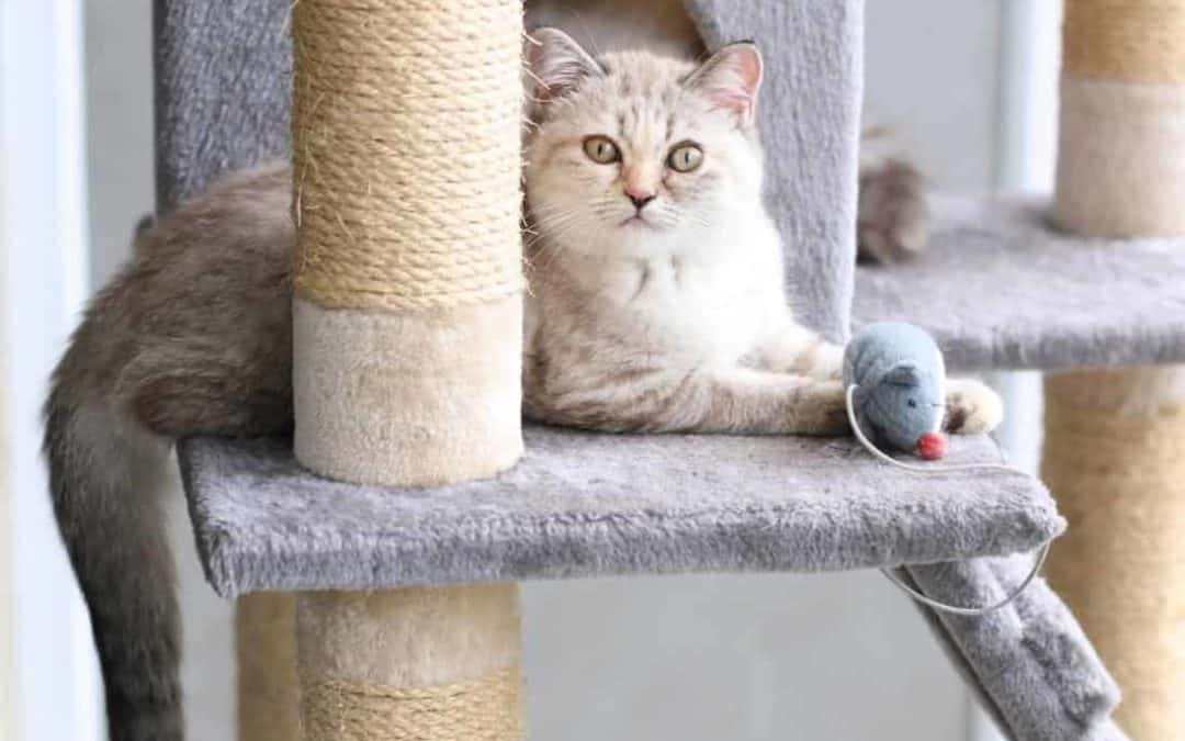 beautiful kitty with mouse toy on cat tree