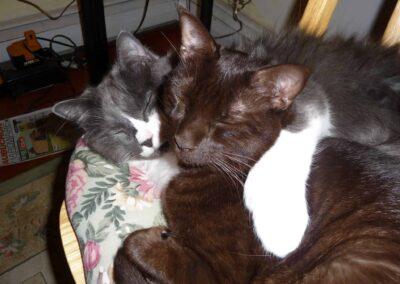 Toby Fenwick two cats sleeping