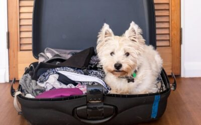 What Are My Pet Care Options When I Go on Vacation?