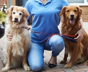 two dogs with kneeling dog walker