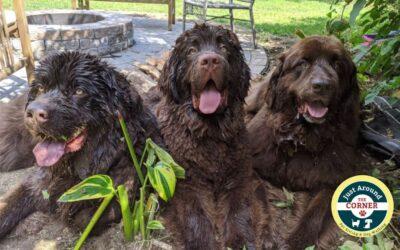 Celebrating National Dog Week