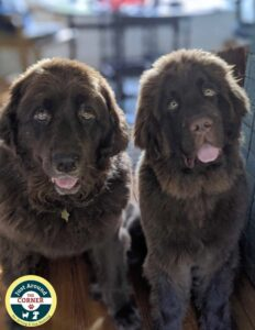JAC Mascots Misha Quinn brown newfies