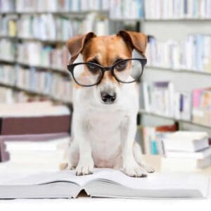 Library dog beagle with glasses