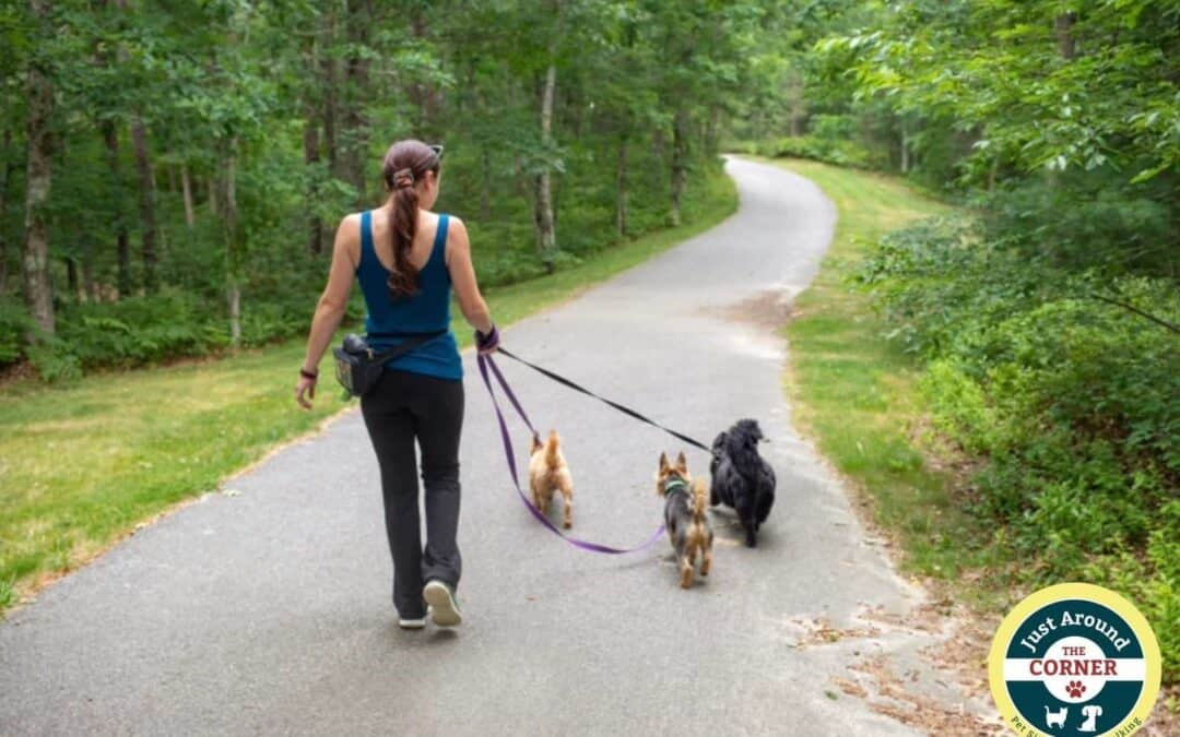 Plymouth dog hiker on the trail with three small dogs