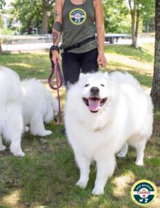Smiling big white dog with dog walker