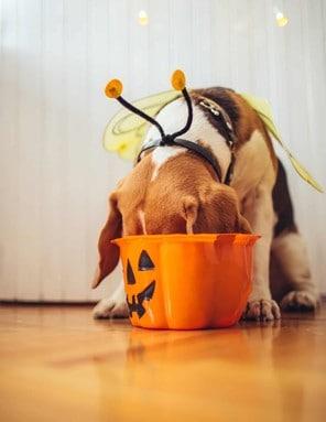 Preventing Pet Halloween Hazards