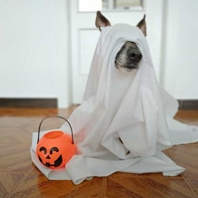 dog in ghost costume with small pumpkin treat bag