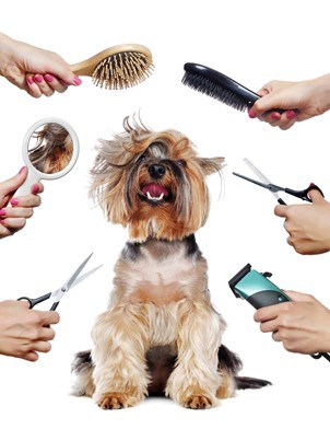 happy dog with grooming tools